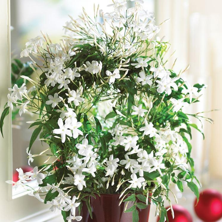 le-5-migliori-piante-da-tenere-in-camera-da-letto_NG4.jpg