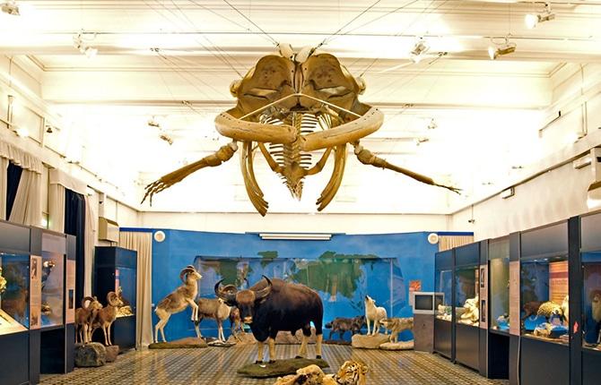 museo-civico-zoologia-roma-balena.jpg
