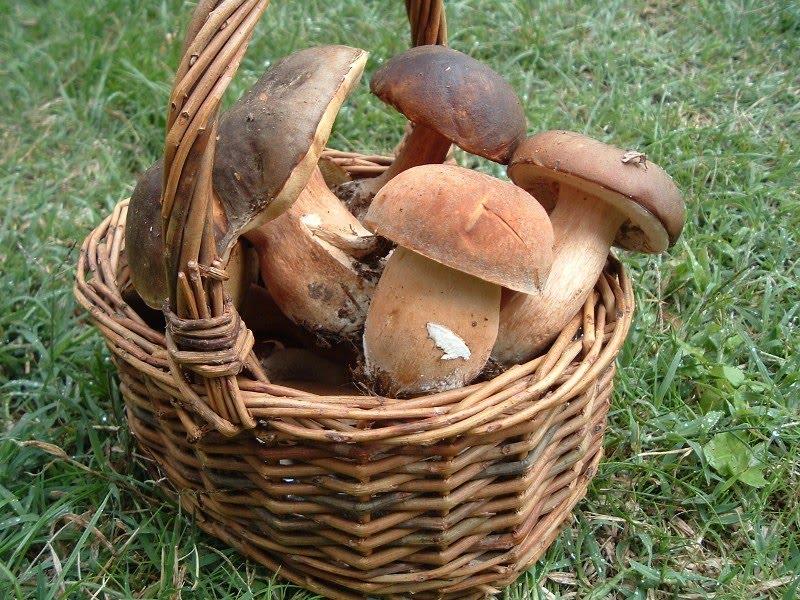 funghi-cestino.jpg