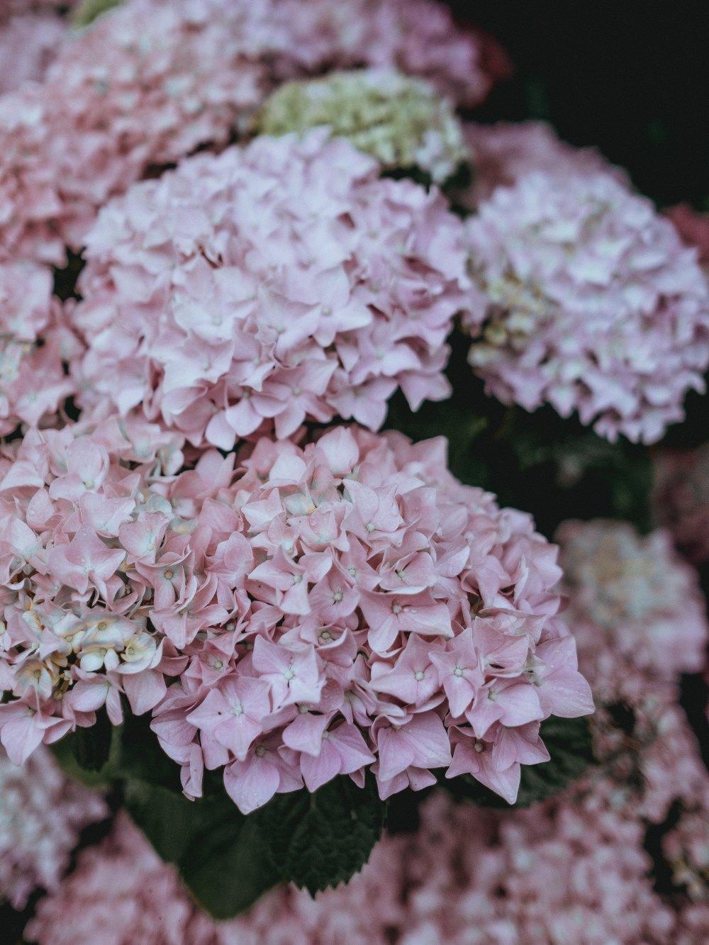 fiori77.jpg